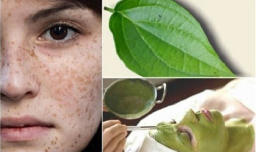 Lá trầu không chứa các khoáng chất và vitamin giúp làm sạch da và trị nám tàn nhang hiệu quả