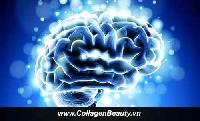 Sản phẩm hỗ trợ não bộ